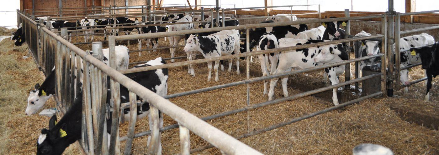 Milchland Schönau GbR